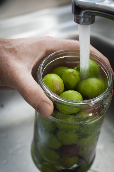 filling the olive jar with water