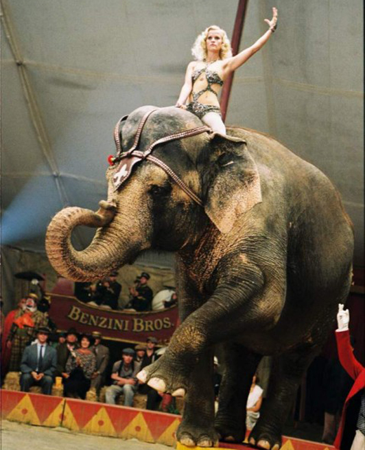 Circus horses water for elephants - photo#14