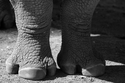 A rhino's interpretation of my feet.